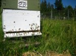 A field day for the bees