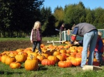 looking for the perfect pumpkin