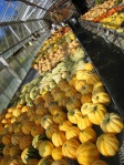 a greenhouse full of curing squash