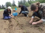 Onion transplanting by practicum students