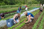 Scott, our Practicum Field Instructor, provides advice on salad harvesting technique