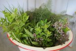 Herbs just harvested for market