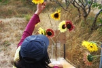One of our volunteers arranging sunflowers to welcome FarmAde guests